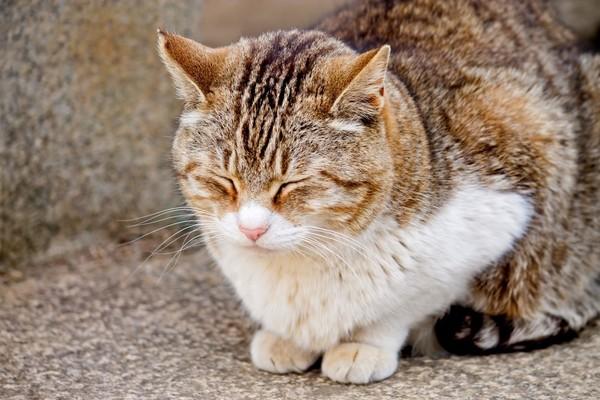 PPW_utatanewosuruneko-thumb-1000xauto-13939.jpg